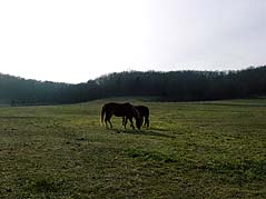 horses in a pasture - Missouri Vacations