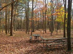 campsite in woods - Missouri Vacations