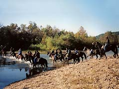horses entering river - Missouri Vacations