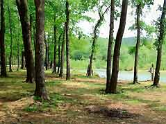 trees by river - Missouri Vacations