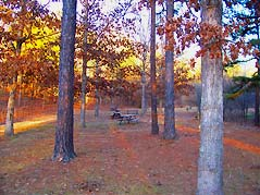 picnic table in forest - Missouri Vacations
