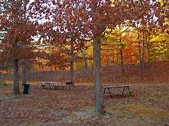 picnic tables in forest - Missouri Vacations