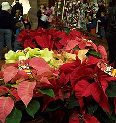 poinsettias - Missouri Vacations
