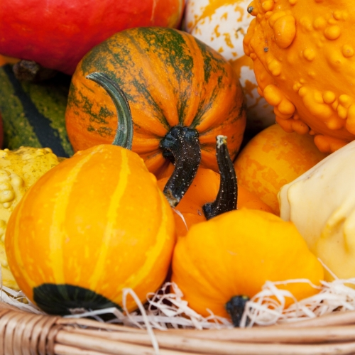 pumpkins and squash - Missouri Vacations