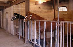 two horses in stalls - Missouri Vacations