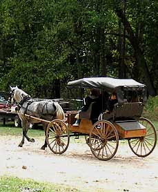 horse and buggy - Missouri Vacations