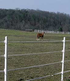 horse in pen - Missouri Vacations