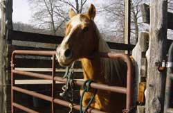 horse in stall - Missouri Vacations
